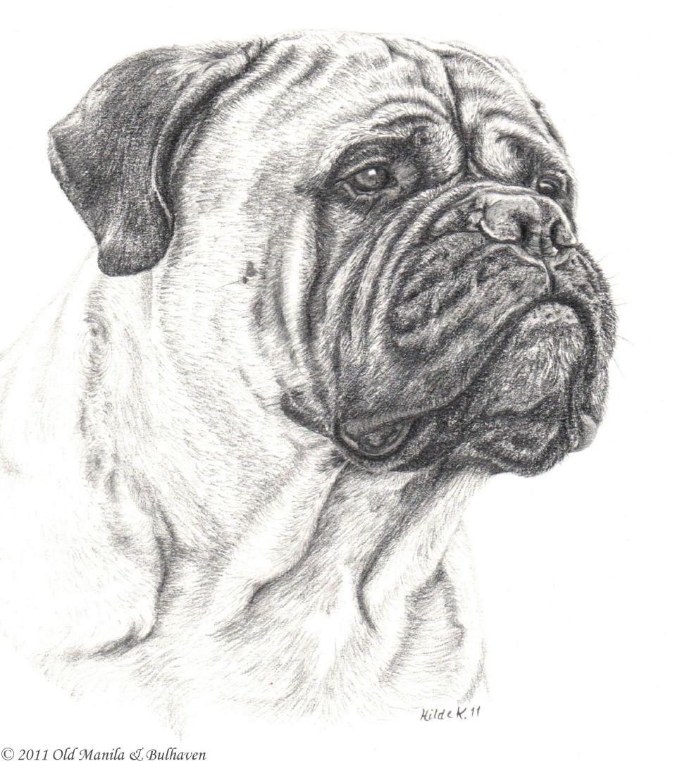 How To Draw A Mastiff Bullmastiff Dog_2_000000016935_5gif